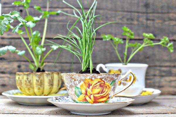 plantas em xícaras