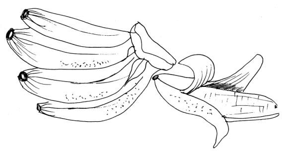 risco banana para pintar em tecido