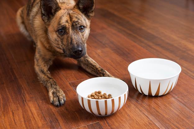 tigelas-decoradas-para-cães