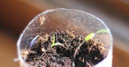 Como Fazer Vasinhos de Garrafa PET Para Plantas