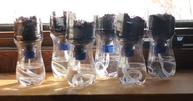 vasinhos-de-garrafa-pet-para-mudas-de-plantas