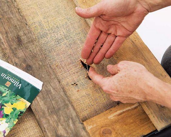 fure-a-juta-e-plante-as-sementes