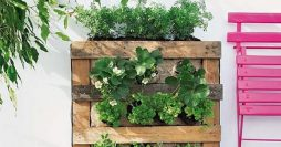 Como Fazer uma Horta Vertical com Pallets