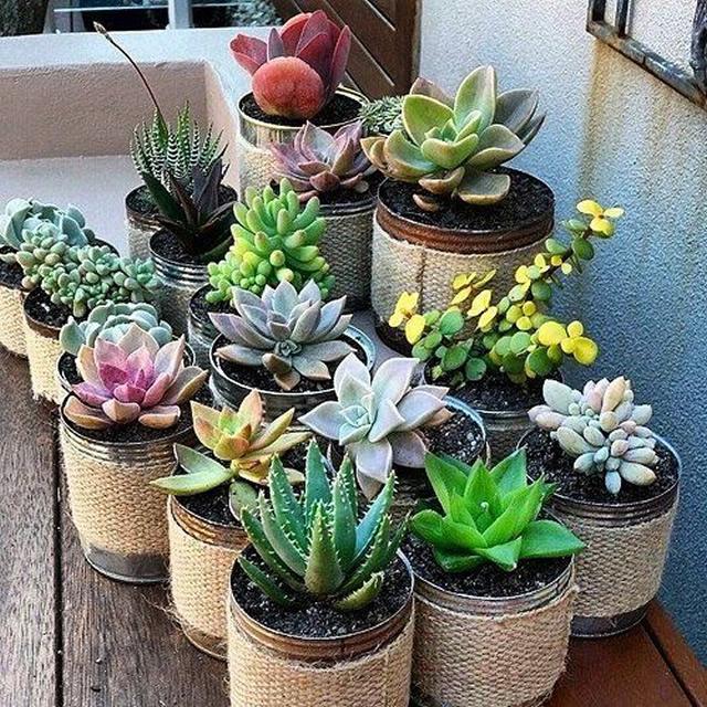 10 ideias simples e geniais para montar um jardim vertical for Cactus de exterior