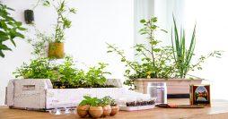 Horta em Casa: 20 Modelos Incríveis para Montar a Sua