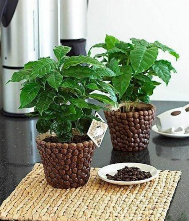 vasos decorativos para plantas