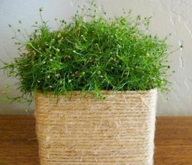 Vaso de plantas