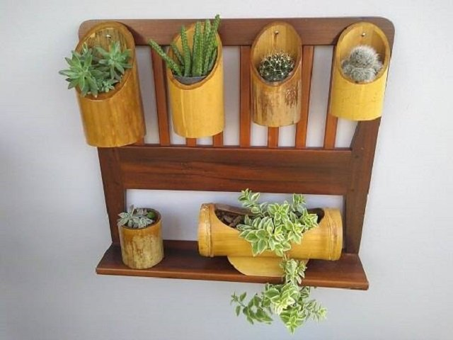 Vasos de planta de bambu