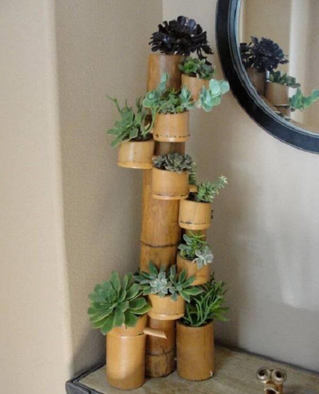 Vasos de plantas de bambu