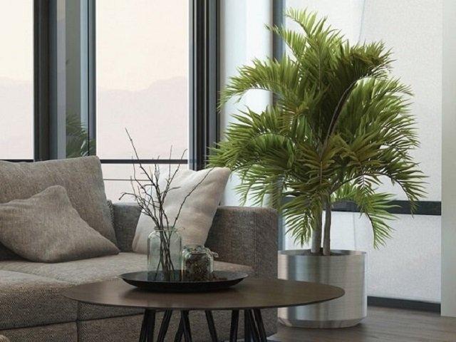 Plantas para sala