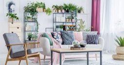 Plantas para Sala: Descubra as Melhores Espécies para Ter Dentro de Casa