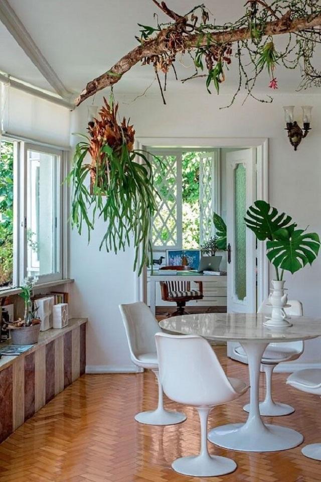 Plantas para perdurar no teto da sala