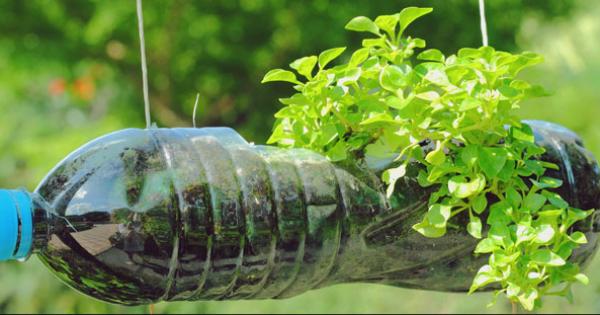 Horta com garrafa pet