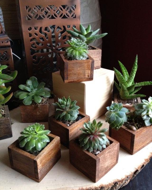 Vasinhos de planta de madeira