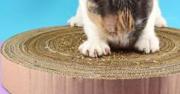 Como Fazer Arranhador para Gatos: 2 Modelos Simples e Baratos