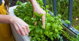 Horta em Apartamento: Aprenda Como Fazer e Cuidar da Sua