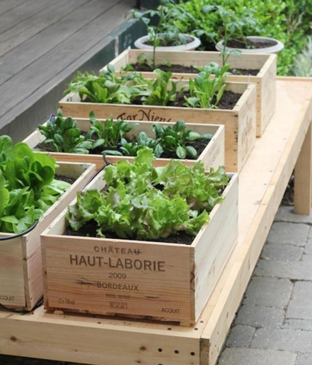 Horta com caixotes