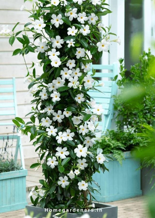 Jardim simples com flores trepadeiras
