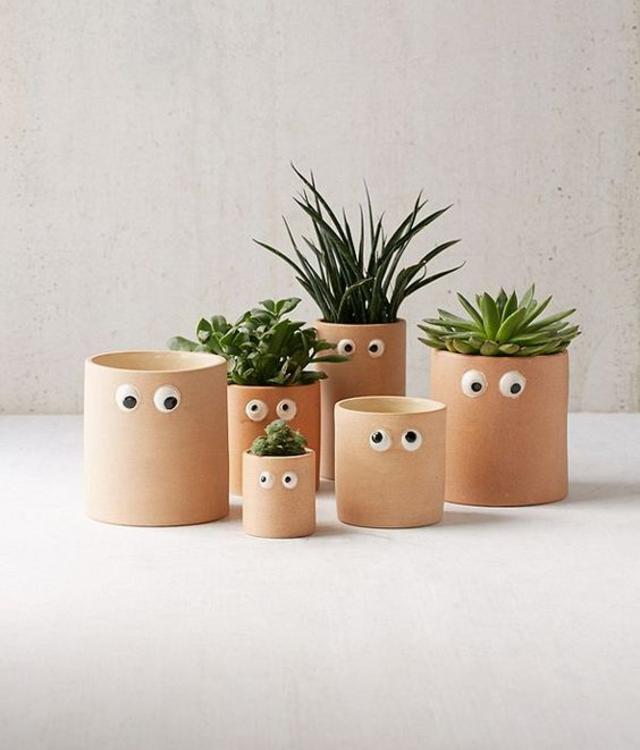 Vasos de plantas com olhinhos