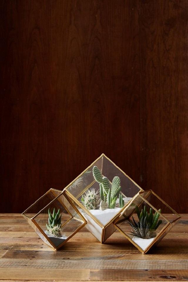 Vasos de vidro para cactos