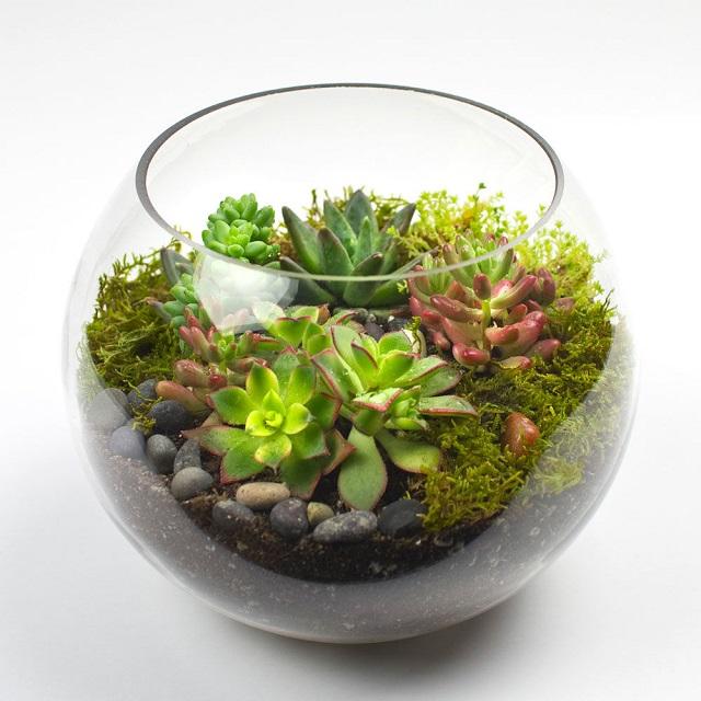 Terrário de vidro
