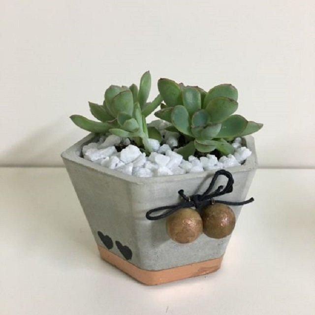Vaso de concreto para suculentas