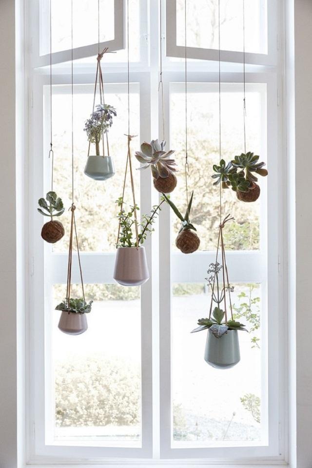 Vasos de plantas pendentes