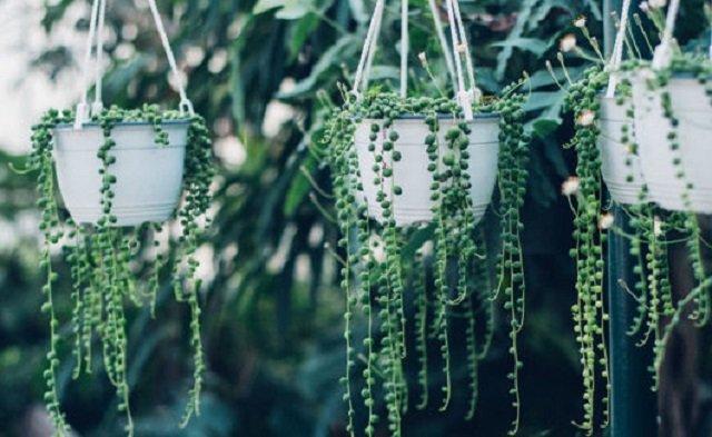 Vasos de plantas suspensos