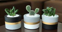 57 Ideias de Vasos para Suculentas e Cactos Lindos e Fáceis de Fazer