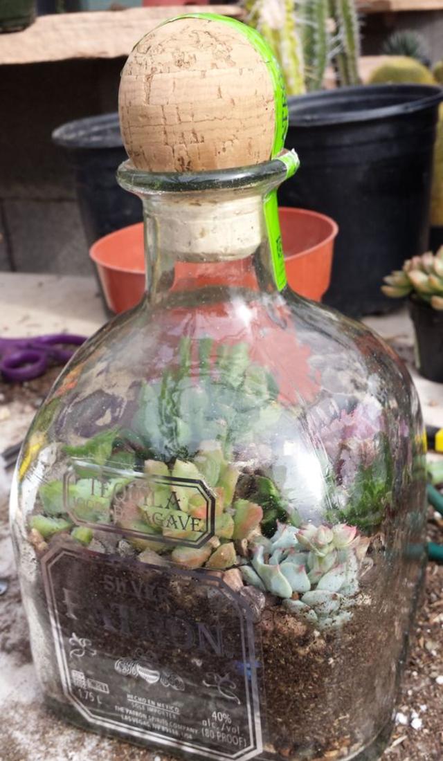 Terrário de garrafa de vidro