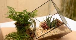 Como Fazer um Mini Jardim: Dicas Práticas + 26 Inspirações