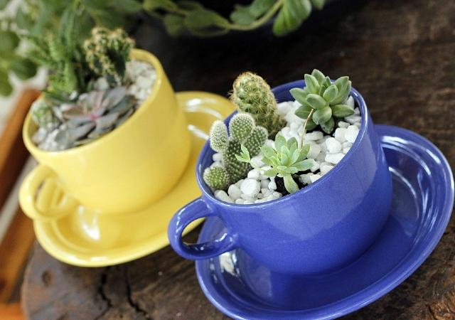 Mini jardim em canecas coloridas