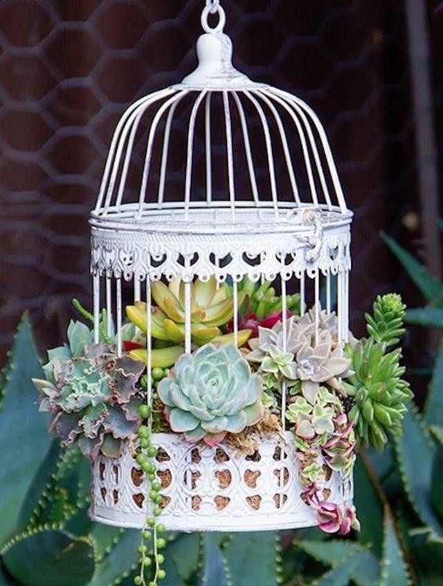 Mini jardim na gaiola