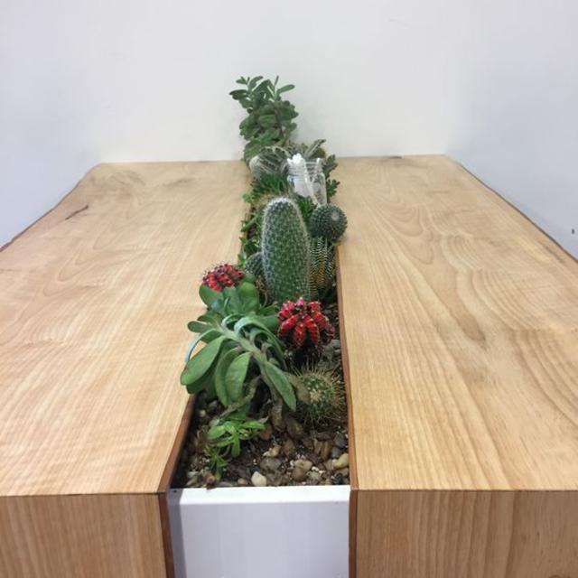 Mini jardim para centro de mesa