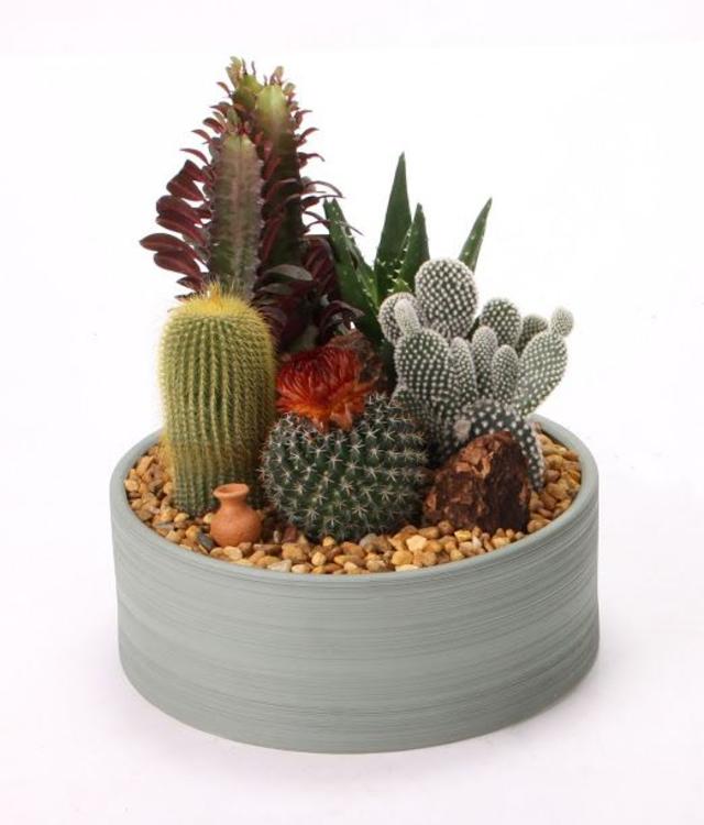 Mini jardim com mix de plantas