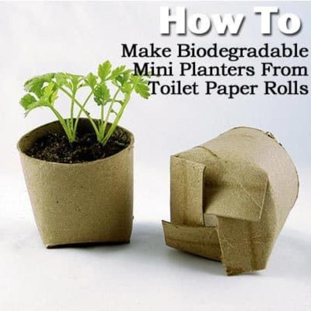 Vaso de plantas feito com rolo de papel higiênico