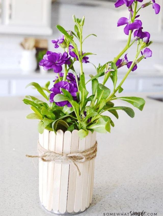 Vaso de plantas de palito de picolé