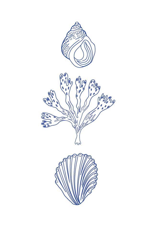 desenho para bordado conchas
