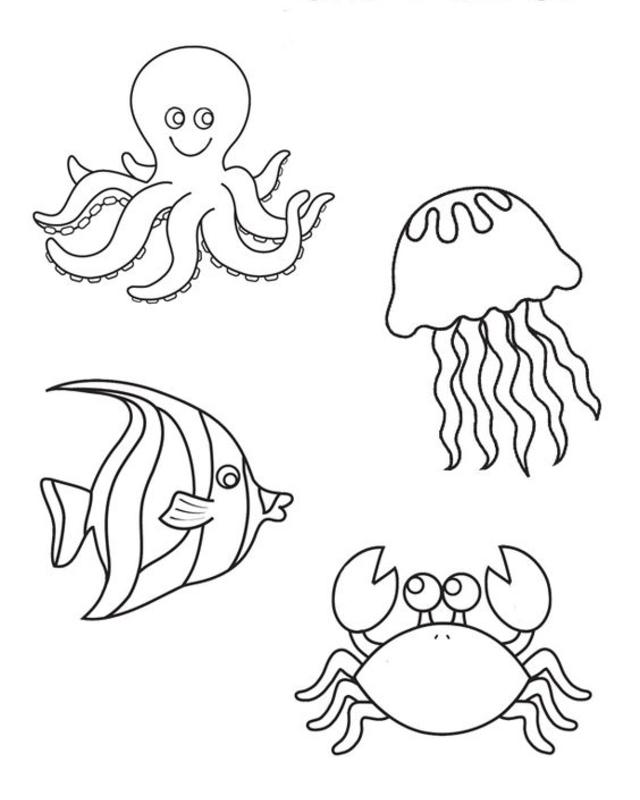 desenho para bordado animais marinhos