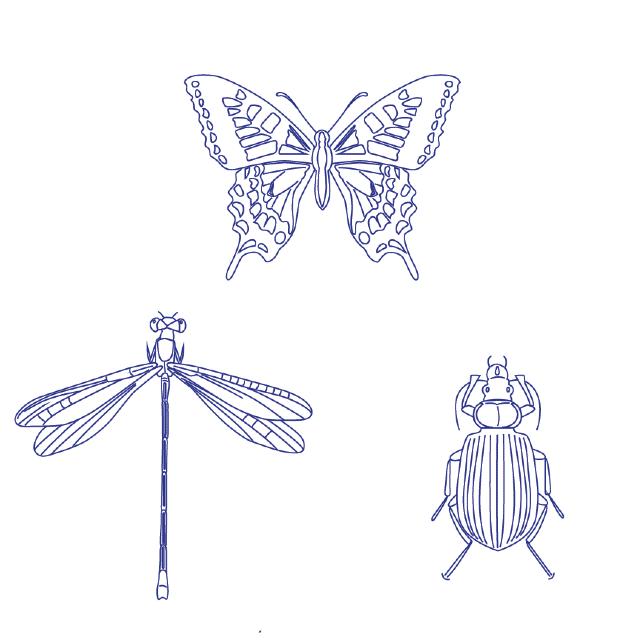desenho para bordado insetos